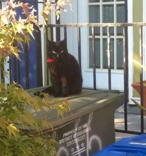 missing cat 2016 05 22
